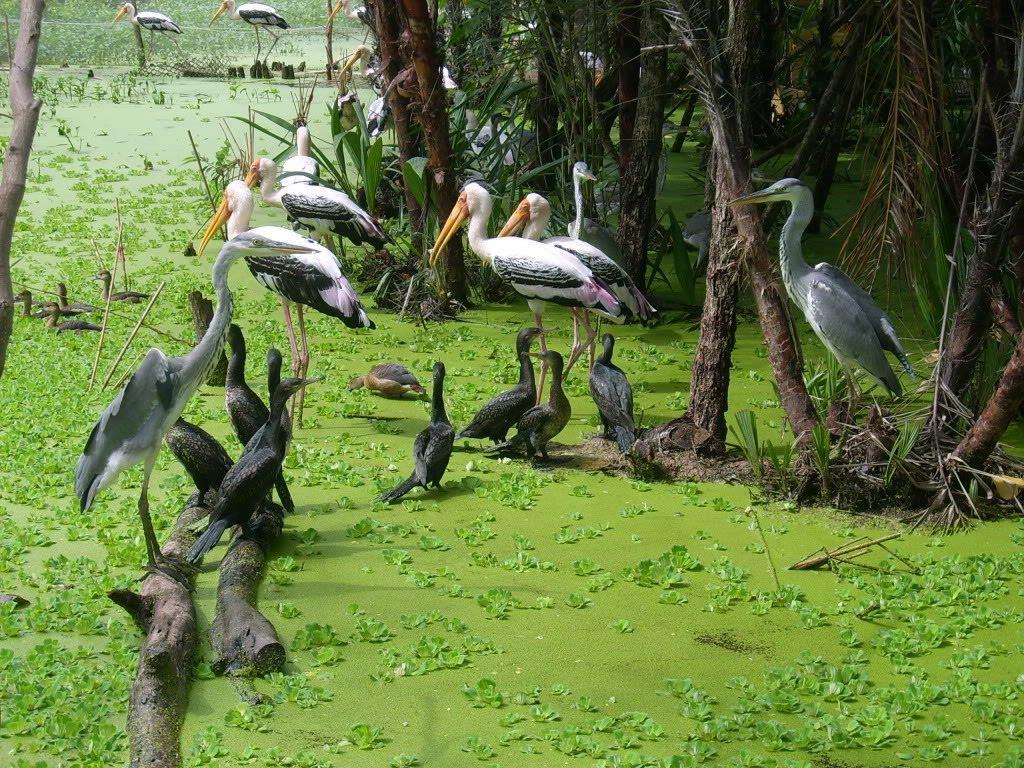 Vườn chim Lâm Viên có diện tích rộng hơn 18ha, là nơi trú ngụ của nhiều loài chim quý
