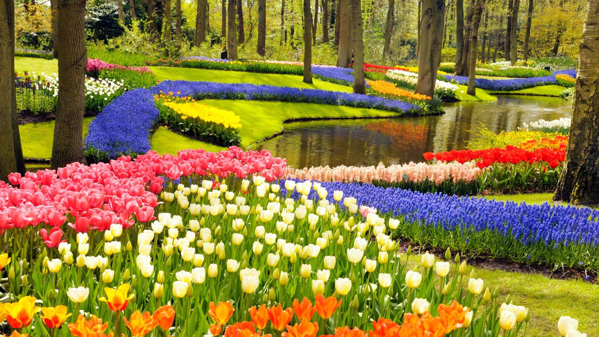 Lễ hội hoa Keukenhof